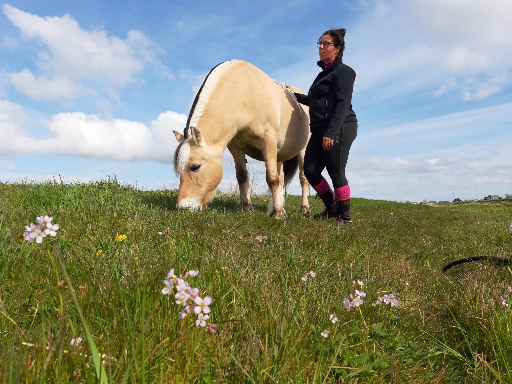 Ontdek jezelf met paarden. Opzoek naar een paardencoach? Ga samen met ikenik coaching aan de slag.
