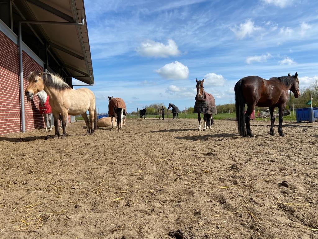 Stal Liza is de coachlocatie voor ik en ik paardencoaching te Berkhout vlakbij Hoorn