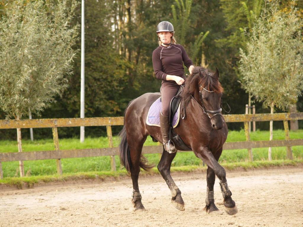 Stal Liza is de coachlocatie voor ikenik paardencoaching.