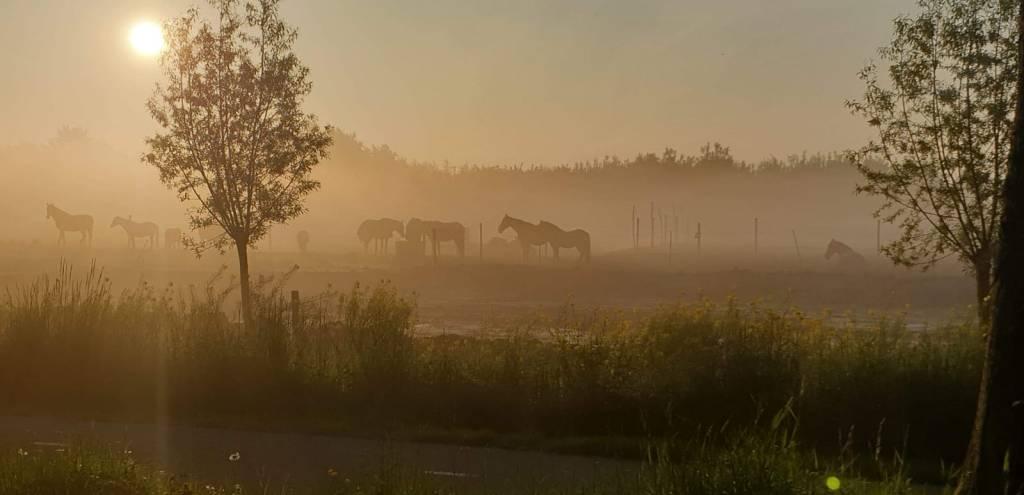 Stal Liza is de coachlocatie voor ik&ik paardencoaching te Berkhout vlakbij Hoorn